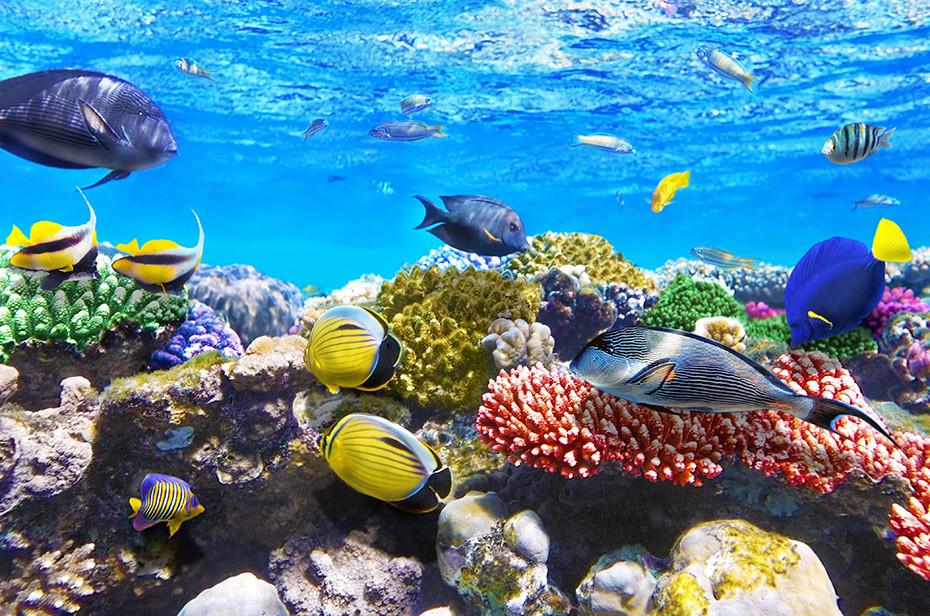 jessicas-escort-magazine-Great-Barrier-Reef